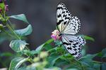 多摩動物公園 蝶