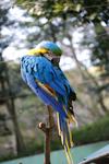 多摩動物公園 インコ