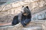 多摩動物公園 ヒグマの哀愁