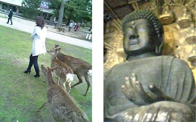 奈良の大仏と奈良公園の鹿。